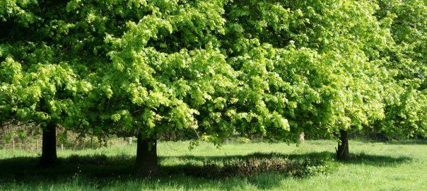 mindfulness-&-gezondheid-bomen