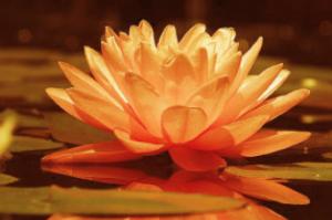 compassie blog