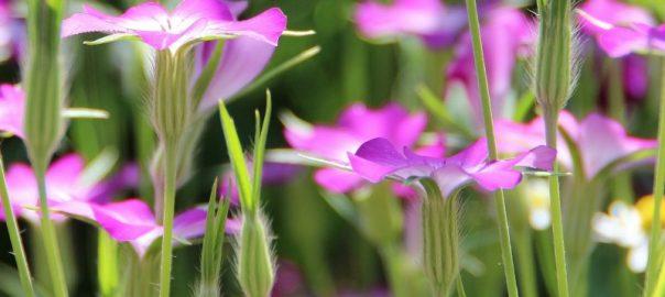 onvermijdelijk-lijden-bloemen