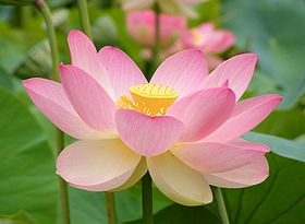 training-stilte-meditatie
